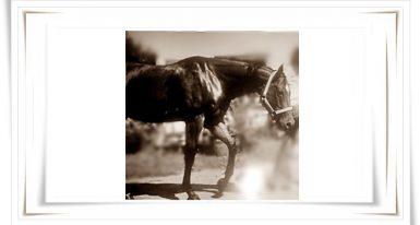 Bewertung Feedback: ❦ ❦ ❦ ❦ ❦ ❦ Du hast bei meinem Pferd Stellen gesehen beschrieben – BINGO!!