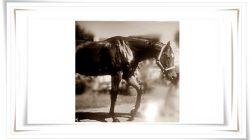 Du hast bei meinem Pferd Stellen gesehen..