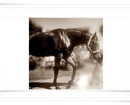 Feedback: ❦ ❦ ❦ ❦ ❦ ❦ Du hast bei meinem Pferd Stellen gesehen..